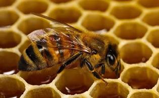 Продукция для пчеловодов
